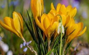 Program obchodów Pierwszego Dnia Wiosny